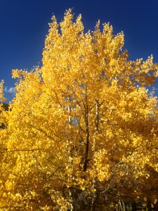 Fall Color, St. Elmo Colorado